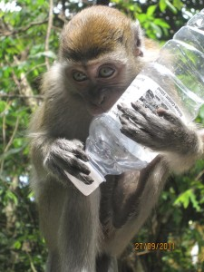 Monkey with Water Bottle